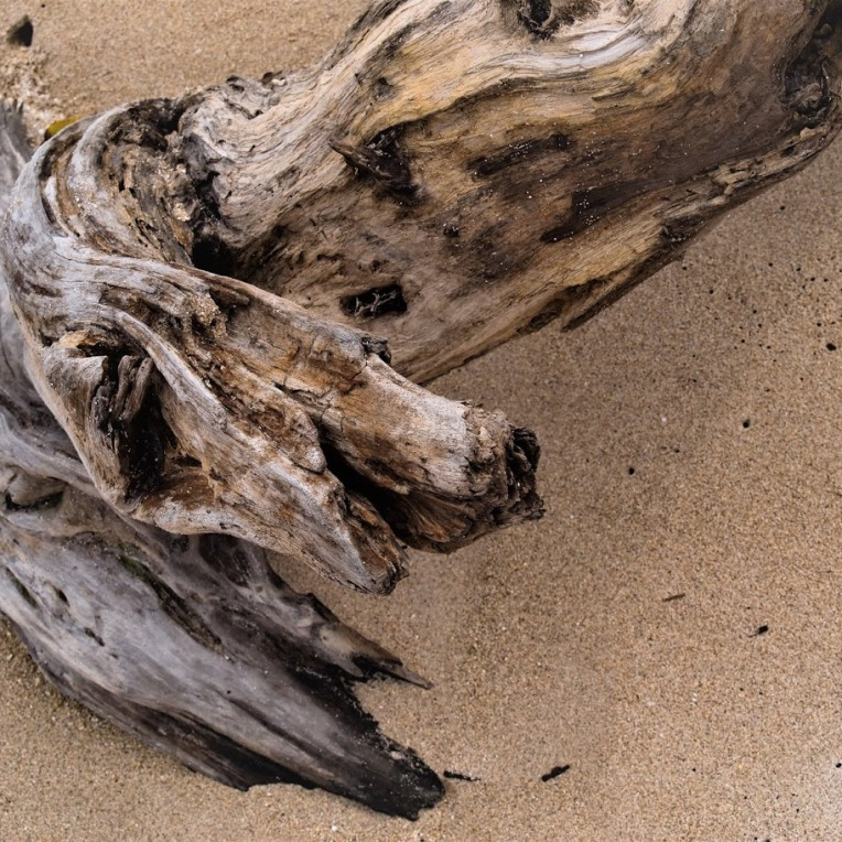 Driftwood, close up, at the beach, photo by LensMoments NS (c) 2019