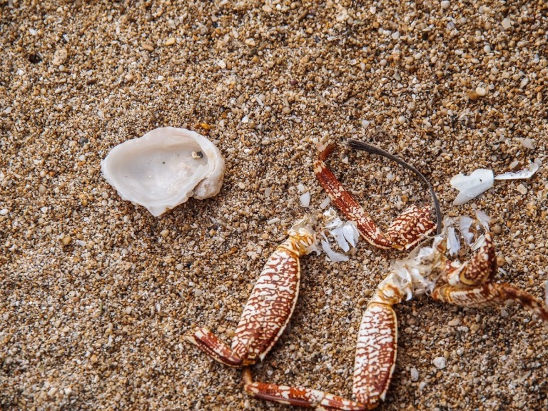 Crab legs, and shells on sand, photo by LensMoments NS (c) 2019