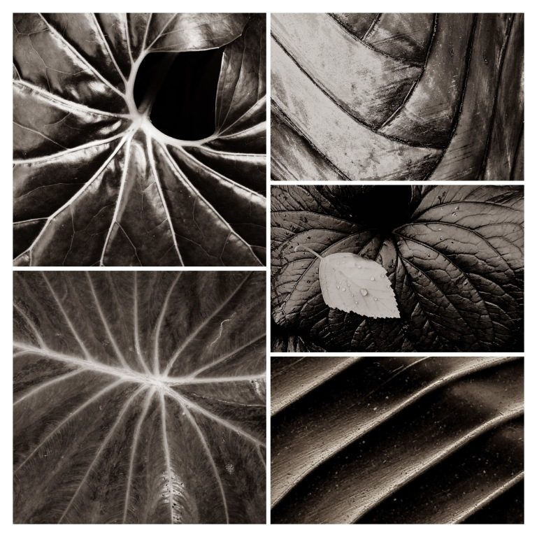 thumbnails from the ConTEXTnaTURE series by LensMoments by Nichole Spates (c) 2017