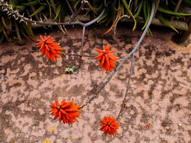 spiky red flowers against mottled background, photographed in Oahu, Hawaii by LensMoments by Nichole Spates (c) 2018