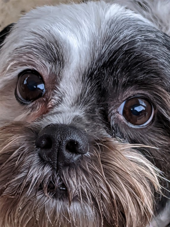 close up of a dog's face, a photograph by LensMomentsNS - Nichole Spates (c) 2019