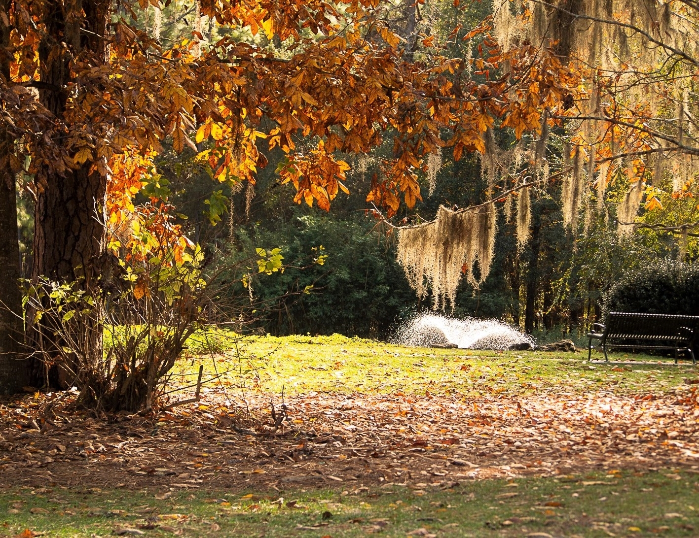 Last week of fall in Ocala, Florida, a photograph by LensMomentsNS - nichole spates (c) 2019