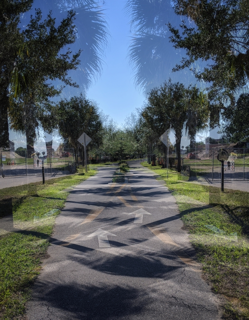 A Confusing Path, a photograph by LensMoments - Nichole Spates (c) 2020