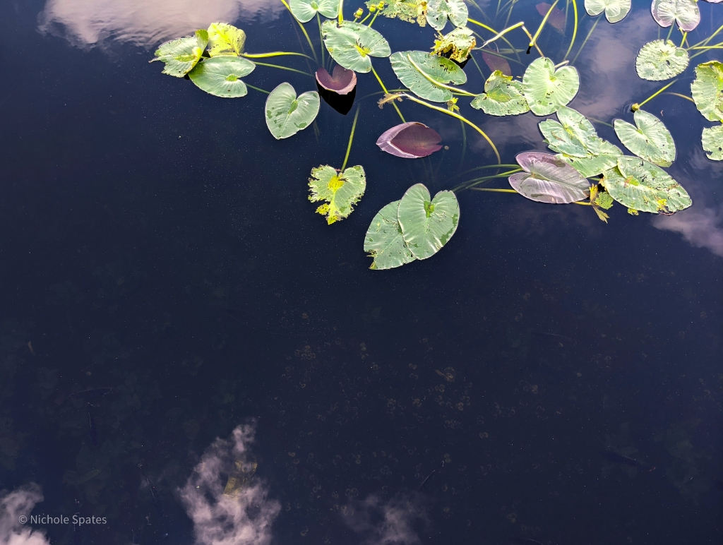 photo of water lily leaves against dark water with reflected clouds, by LensMoments - Nichole Spates 2020